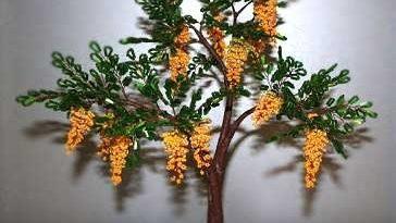 Дерево акации