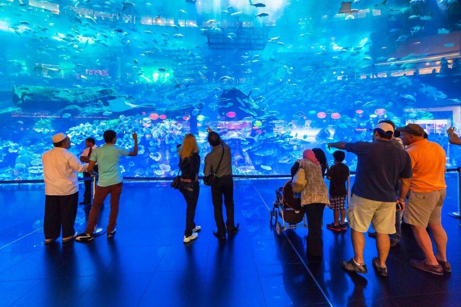 Аквариум в Дубай Молл